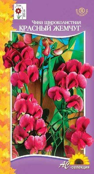 Цветы многолетние - Чина (горошек многолетний) Широколистная Красный жемчуг