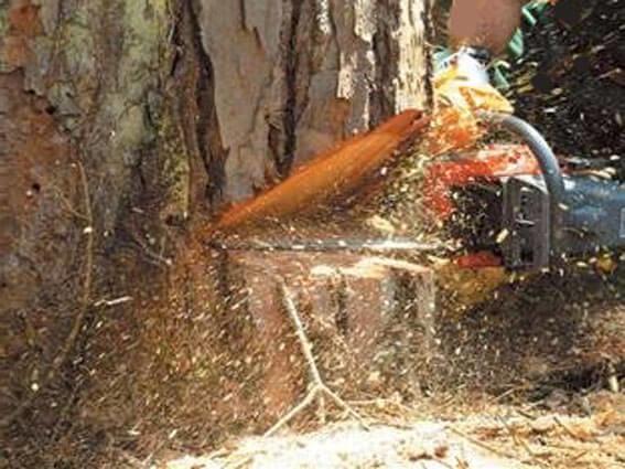 Спилить дерево (вырубка деревьев) диаметром 10 см