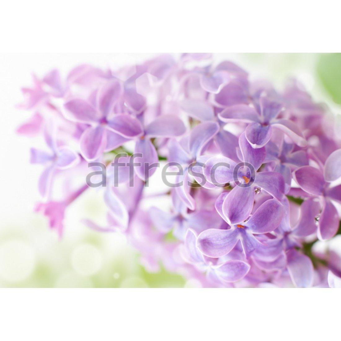 Фреска Affresco Фиолетовая сирень арт. F11838