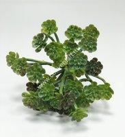 Искусственная Эхеверия щетинистая (setosa) суккулент 20H зеленая