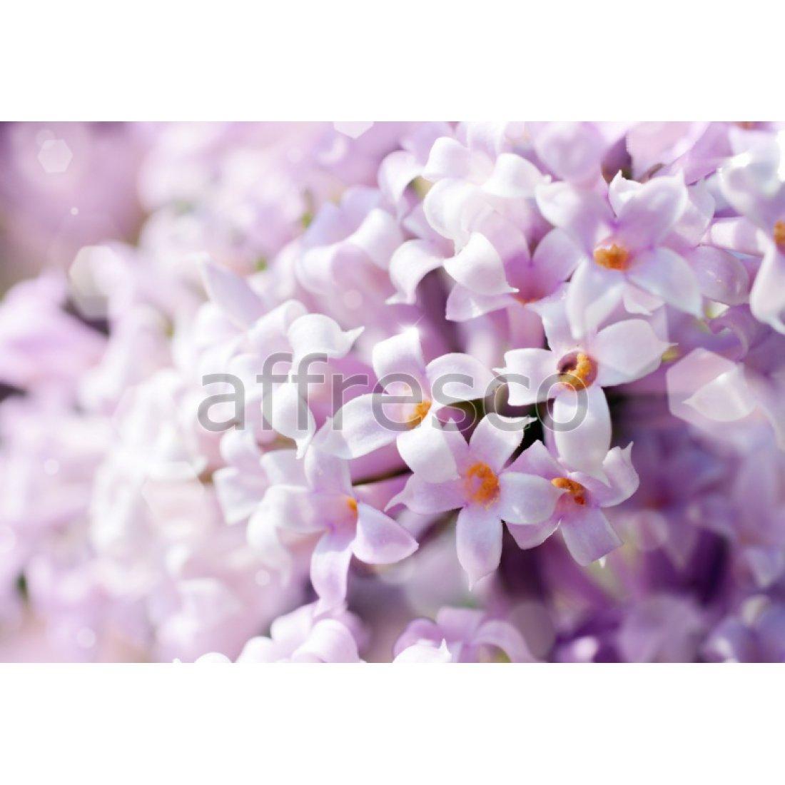 Фреска Affresco Макросъемка белые цветки арт. F11840