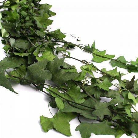 HEP/9103 Плющ вьющийся ветви зеленый