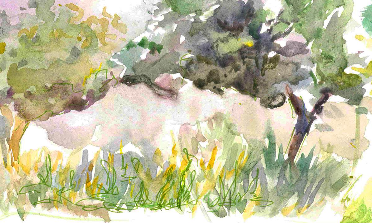Иллюстрация Виктории Бестаевой к сценарию «Загадочный лес»