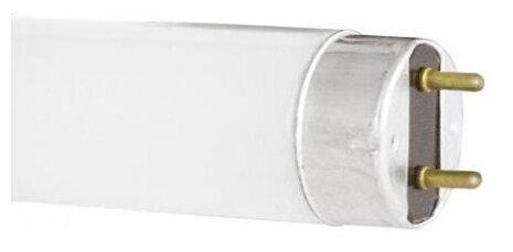 Лампа люминесцентная Camelion 3007, G13, T8, 15Вт