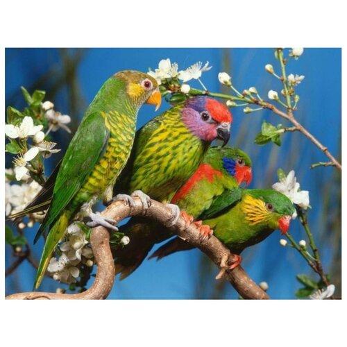 Color Kit Картина по номерам Волнистые попугаи 30х40 см (KS047)Картины по номерам и контурам<br>