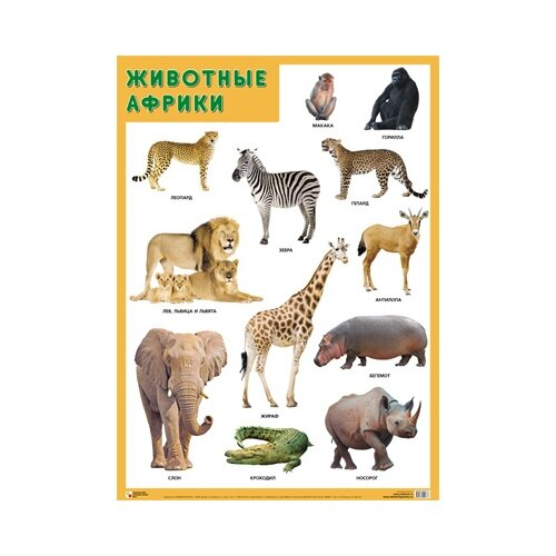 Купить Плакат Мозаика-Синтез Животные Африки, Обучающие плакаты
