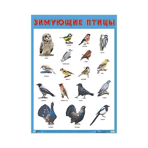 Купить Плакат Мозаика-Синтез Зимующие птицы, Обучающие плакаты