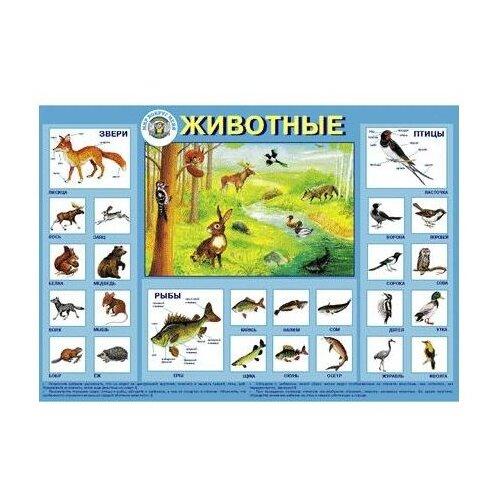 Купить Плакат Маленький гений Животные 9007, Обучающие плакаты