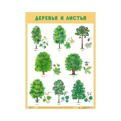 Купить Плакат Мозаика-Синтез Деревья и листья, Обучающие плакаты