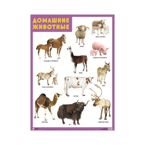 Купить Плакат Мозаика-Синтез Домашние животные, Обучающие плакаты