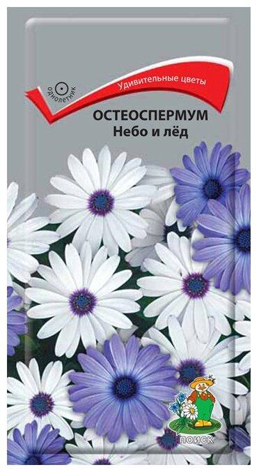 Семена ПОИСК Остеоспермум Небо и лед 0.1 г