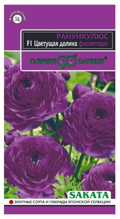 Ранункулюс Цветущая долина фиолетовая