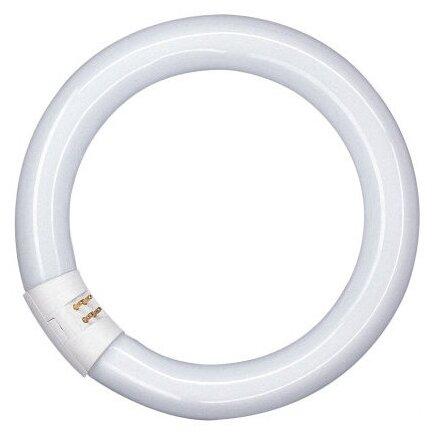 Лампа люминесцентная кольцевая ЛЛ 22Вт L 22/840 белая (581082) Osram 4008321581082