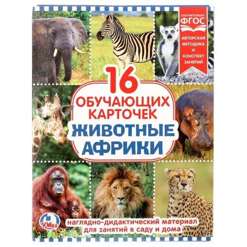 Купить Набор карточек Умка Животные Африки 21.8x16.7 см 16 шт., Дидактические карточки
