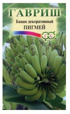 "Банан декоративный ""Пигмей"" (3 штуки)"