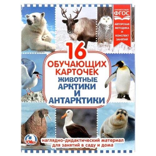 Купить Набор карточек Умка Животные Арктики и Антарктики 21.8x16.7 см 16 шт., Дидактические карточки