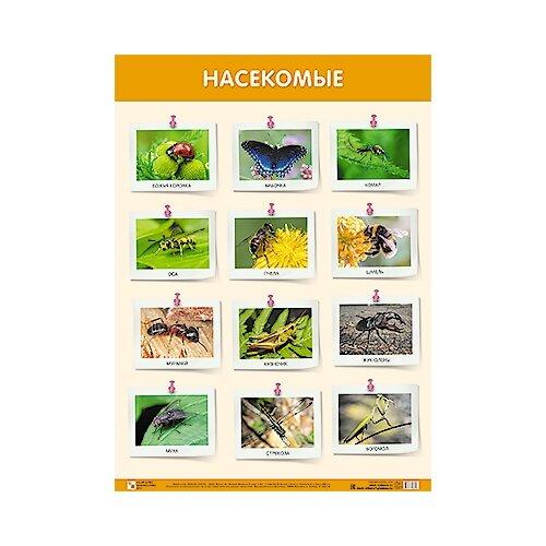 Купить Плакат Мозаика-Синтез Насекомые, Обучающие плакаты
