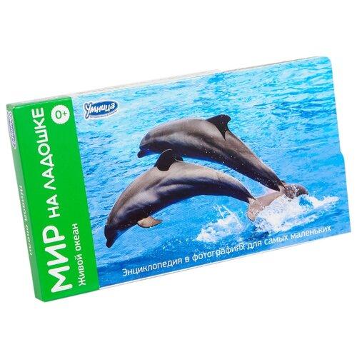 Набор карточек Умница Мир на ладошке. Живой океан 18x10 см 24 шт. раннее развитие умница мир на ладошке 1 живой океан