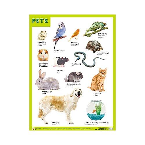 Плакат Мозаика-Синтез PETS (Домашние питомцы) недорого