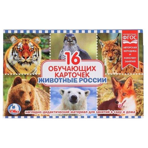 Купить Набор карточек Умка Животные России 19x12 см 16 шт., Дидактические карточки