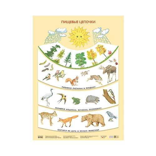 Купить Плакат Мозаика-Синтез Пищевые цепочки, Обучающие плакаты