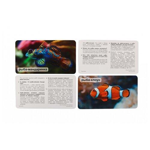 Фото - Набор карточек Умница Мир на ладошке. Чудо-рыбы 18x10.3 см 24 шт. набор карточек умница мир на ладошке выпуск 2 18x10 см 144 шт