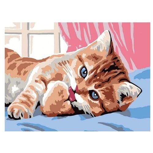 Купить Белоснежка Картина по номерам Кот чистюля 30х40 см (017-CE), Картины по номерам и контурам