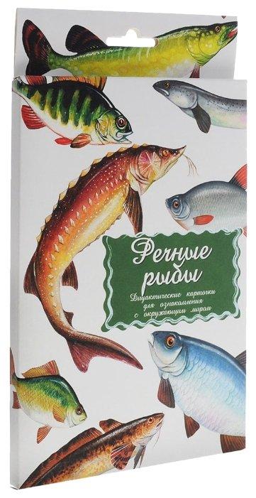 Набор карточек Маленький гений Речные рыбы 25x15 см 16 шт.