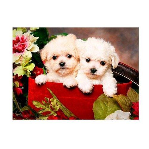Купить Пазл Pintoo Два щенка (Н1386), 300 дет., Пазлы