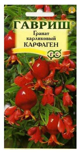 Семена Гавриш Гранат карликовый Карфаген, 5 шт.