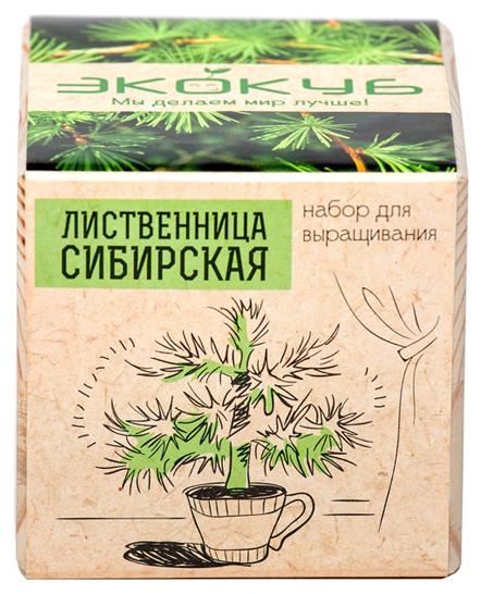 Набор для выращивания Эйфорд Экокуб Лиственница сибирская ECB-01-07