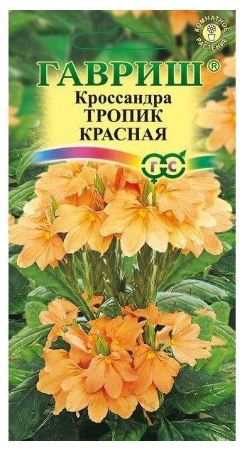 Кроссандра Тропик красная