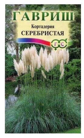 Кортадерия Серебристая Гавриш (Пампасная трава) 1 гр