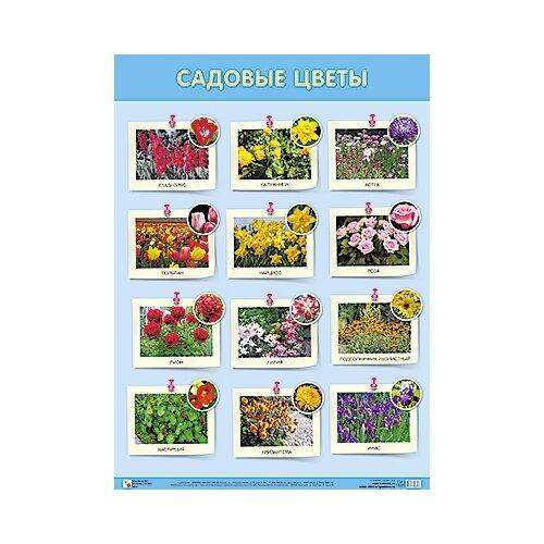Купить Плакат Мозаика-Синтез Садовые цветы, Обучающие плакаты