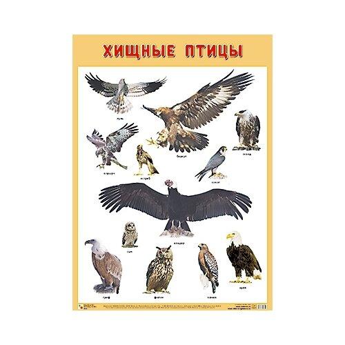 Купить Плакат Мозаика-Синтез Хищные птицы, Обучающие плакаты