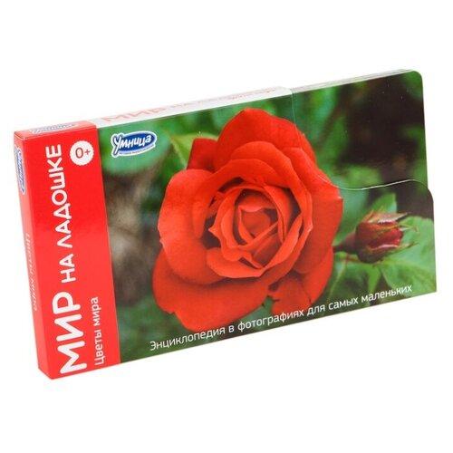 Набор карточек Умница Мир на ладошке. Цветы мира 18.2x10.2 см 24 шт.Дидактические карточки<br>