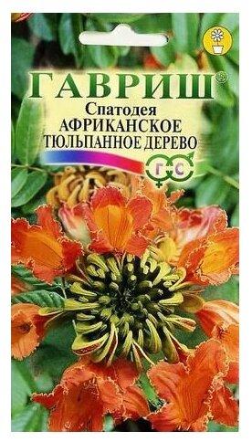 Семена Гавриш Спатодея Африканское тюльпанное дерево 0,05 г