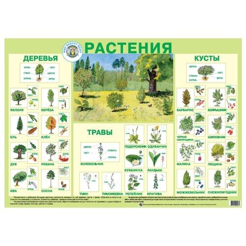 Купить Плакат Маленький гений Растения 9006, Обучающие плакаты