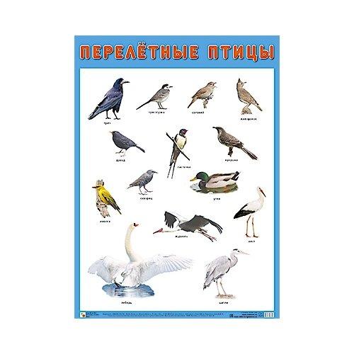 Купить Плакат Мозаика-Синтез Перелетные птицы, Обучающие плакаты