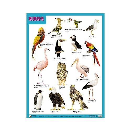 Купить Плакат Мозаика-Синтез BIRDS (Птицы), Обучающие плакаты
