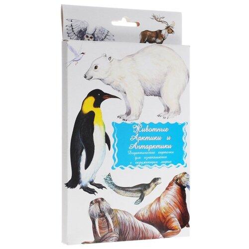 Набор карточек Маленький гений Животные Арктики и АнтарктикиДидактические карточки<br>