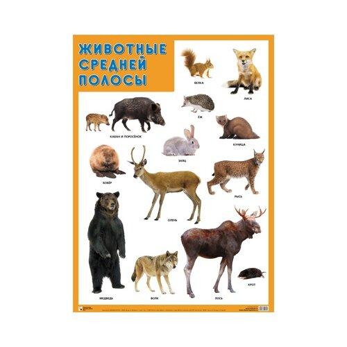 Плакат Мозаика-Синтез Животные средней полосы