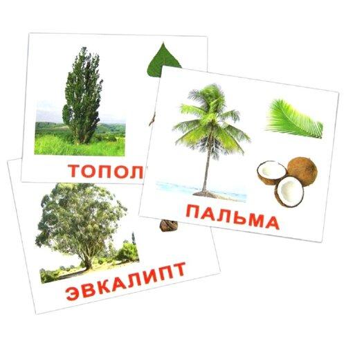 Набор карточек Вундеркинд с пелёнок Деревья 16.5x19.5 см 20 шт. вундеркинд с пелёнок подарочный набор вундеркинд с пелёнок мегачемодан