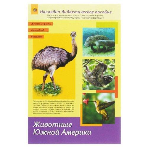 Набор карточек Рыжий кот Животные Южной Америки А4 30x20 см 12 шт.