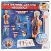 Набор Играем вместе Внутренние органы человека (KY-10001)