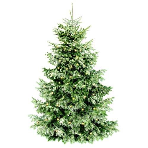 Штора с елкой BONDIBON Самая компактная елка (ВВ2056), зеленый прописи в клеточку елка за елкой