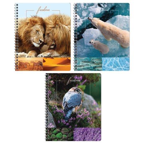 Купить ArtSpace Упаковка тетрадей Природа. Freedom Т48спкГЛ_11951, 16 шт./3 дизайна, клетка, 48 л., Тетради