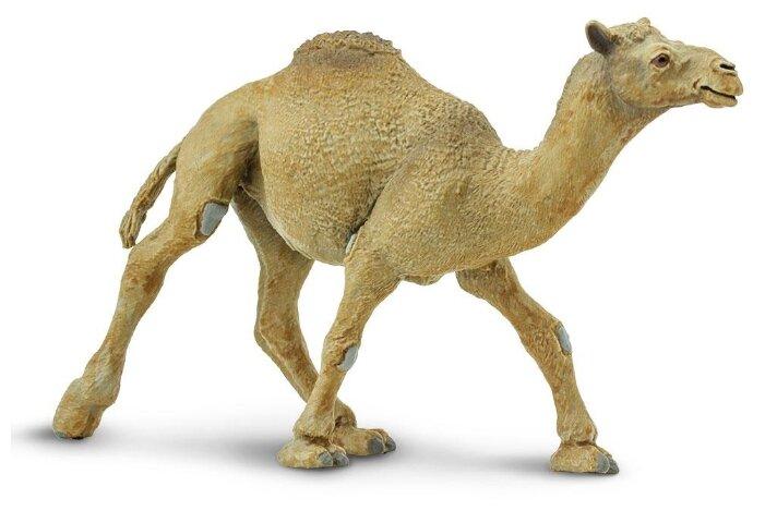 Фигурка Safari Ltd Одногорбый верблюд 222429