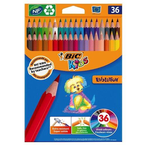 BIC Цветные карандаши Evolution, 36 цветов (950526) голубой
