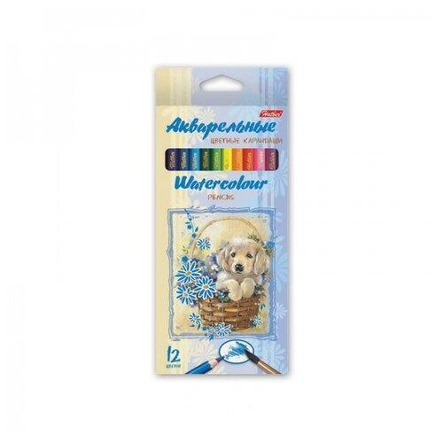 Купить Hatber акварельные цветные карандаши Щенок в корзинке, 12 цветов (BKa_12340), Цветные карандаши
